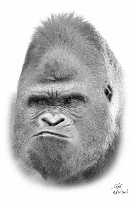 King Kong por Noncsi